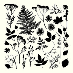 Set of illustrations of plants. Silhouettes. Freehand drawing