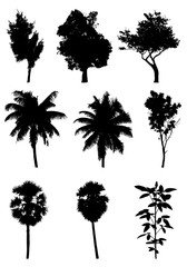 tree silhouettes on white background ,nature,vector illustration