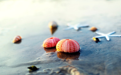 Sea urchin shells on wet sand beach