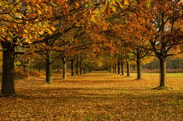 Autumnal path at Wollaton Park, Nottingham