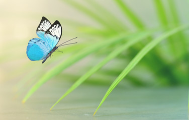 Beautiful blue butterfly sitting on green leaves