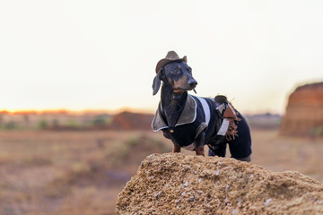 western cowboy sheriff   dachshund dog with gun, wearing american hat and cowboy costume outside in the desert, against the sunset sky