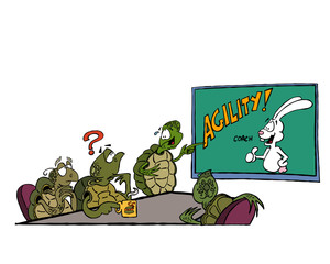 Agility Turtles
