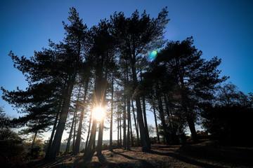 Woodbury Common in Devon