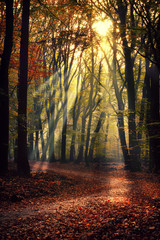 The most beautiful autumn forest in the Netherlands with mystical and mysterious views and atmospheric sunrises in the early misty mornings.