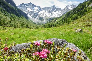 Fototapete - Landschaft in den Alpen in Tirol