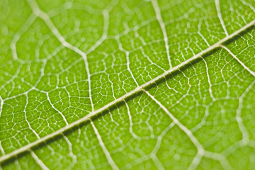 Leaf macro abstract pattern
