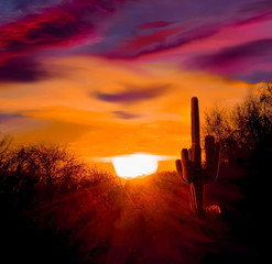 Fotobehang Arizona Sunrize on the Arizona desert a blazing sun and the horizon a vivid magenta and blue clouds cover the landscape an a Saguaro cactus in silhouette.