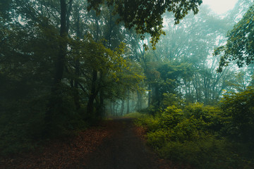 Fairy tale trail in foggy forest. Autumn morning in the woods