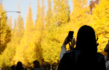 Women take photos of yellow ginkgo trees in Tokyo