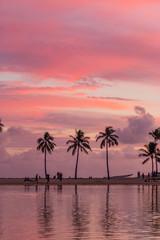 Waikiki Life