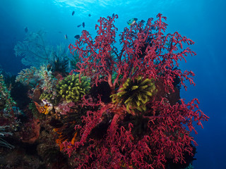 Colorful Reef, farbenfrohes Korallenriff