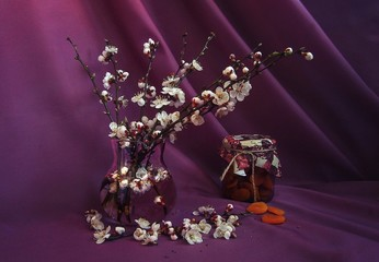 Still life with blooming branches of apricots