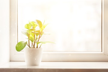 Green plant on the windowsill on background Wall mural