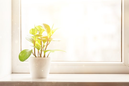 Green plant on the windowsill on background