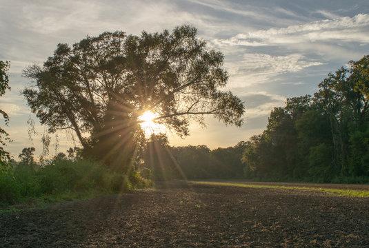 afternoon at an Avoyelles Parish farm