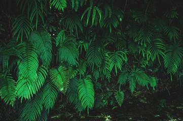 tropical ferns leaf texture  dark green background