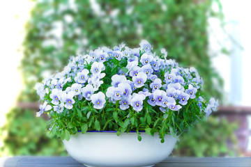 Pansy bloemen in de kleuren lila, violet en blauw in een witte vintage wasbak of pot op een balkontafel, kopieer of tekstruimte