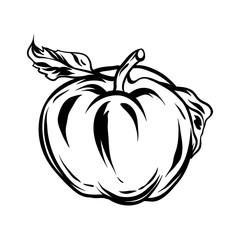 Illustration of apple.