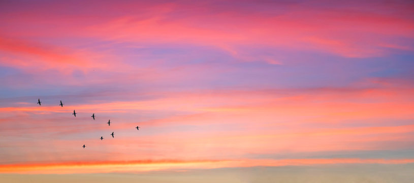Migratory birds flying in the shape of v on the cloudy sunset sky. Sky and clouds with effect of pastel colored.