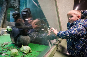 Children look at western lowland gorilla Vizuri at the Moscow Zoo in Moscow