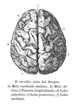 Vintage illustration of anatomy, brain upper view with  anatomical descriptions in italian
