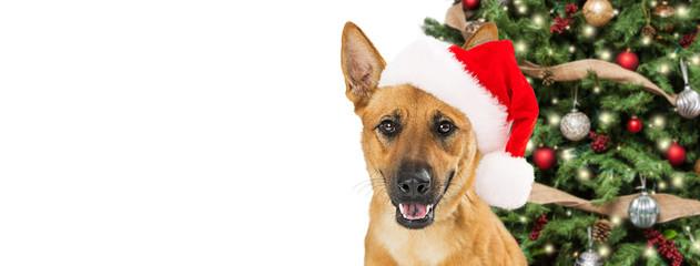 Happy Christmas Dog Web Banner
