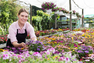 Female worker checking flowers in glasshouse
