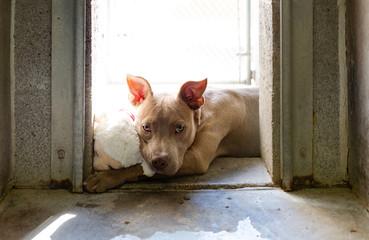 Sad Lonely Homeless Dog at Shelter