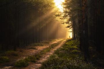 Wanderer Wald - Sonnenaufgang mit Nebel