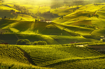 Langhe vineyards sunset panorama, Barolo, Piedmont, Italy Europe.