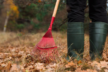 A man gardener rakes autumn leaves in the garden. Rake close up. Autumn work in the garden. Concept autumn, yellow leaves, autumn mood. Copy space.