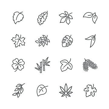 Leaves and plants related icons: thin vector icon set, black and white kit
