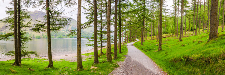 Forest at Buttermere, Lake District National Park, UNESCO World Heritage Site, Cumbria, England, United Kingdom, Europe