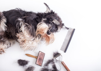Cute dog with grooming equipment
