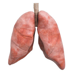 Realistic human lungs, 3D rendering