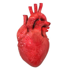 Realistic human heart organ with aorta and arteries, 3D rendering