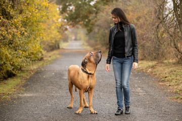 Yong woman with big dog Fila brasileiro breed in autumn park