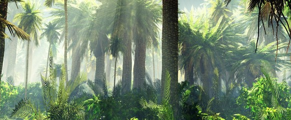 Jungle in the mist morning, palm trees in the haze,