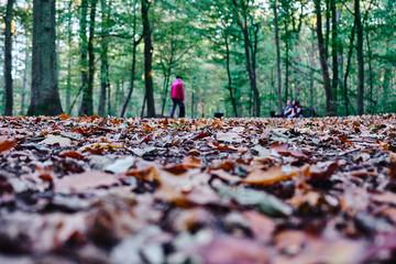 Waldweg aus der Insektenperspektive, Ein Meer aus buntem Laub, Im Hintergrund grüne Bäume und Spaziergänger. Der Fokus liegt auf dem Laub im Vordergrund.