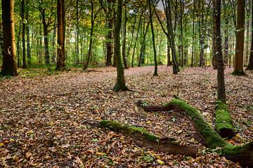 Laubbedeckter Waldweg im Herbst, am Rand liegen abgefallene Äste die mit Moos bewachsen sind. Gremberger Wald in Köln / Deutschland