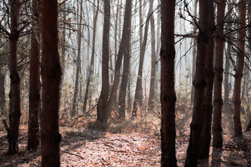 Autumn forest with tree trunks