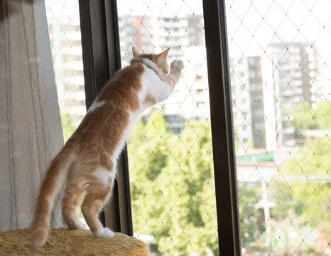 Gato en ventana con malla protectora