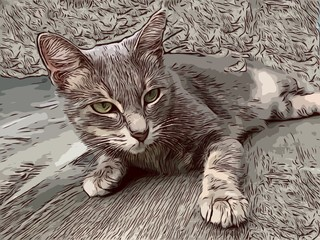 Illustration of the cat