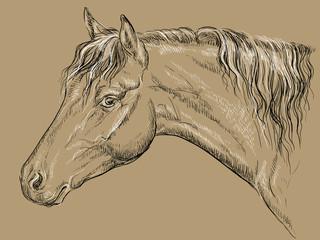 Horse portrait-11 on brown background