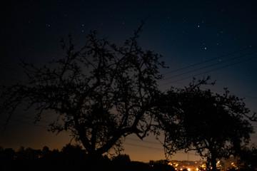 Baum und Sterne bei Nacht