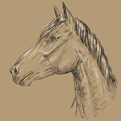 Horse portrait-16 on brown background