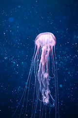 Wall Mural - glowing jellyfish underwater with light particles
