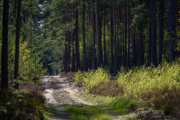 simple countryside forest road in perspective