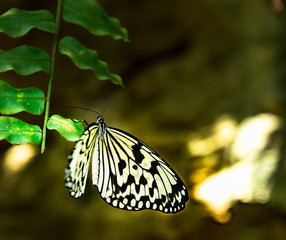 Butterfly hanging